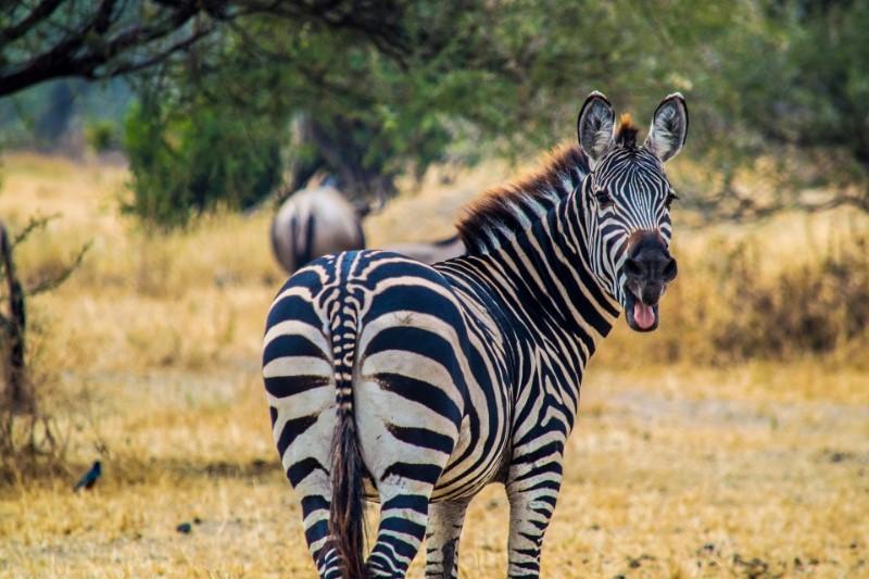 Het Andere Zuid Afrika