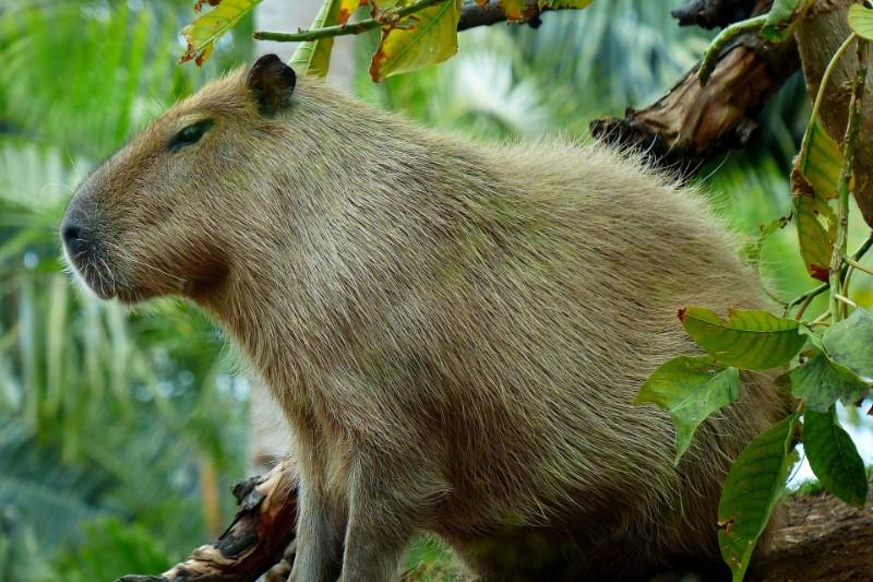 Bouwstenen – Jungle Tour Rurrenabaque