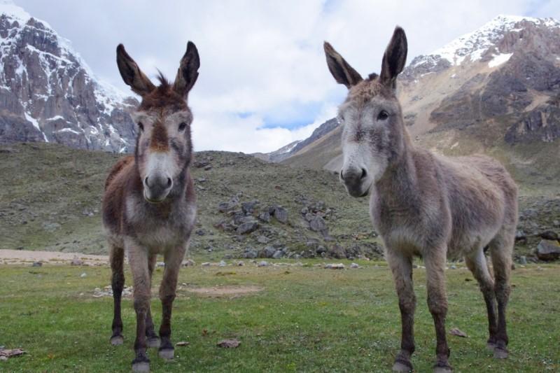 Verschillende Trekkings Peru