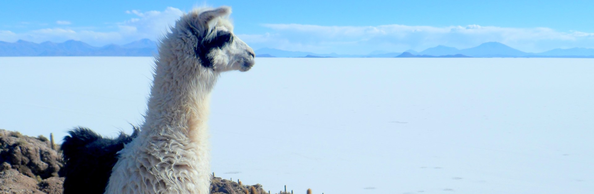 Inspiratie – Combineren met Bolivia